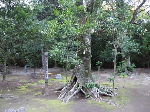 江田神社たまゆらの木