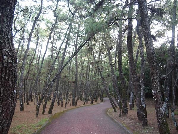 阿波岐原森林公園 内の写真