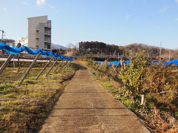 比々多神社元宮への道2