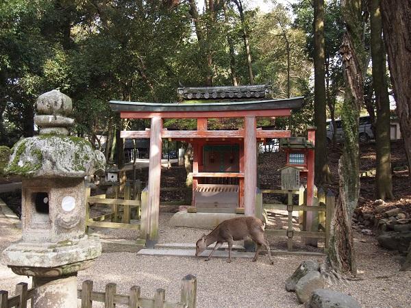 kasuga-shrine3