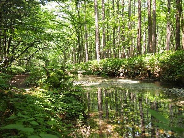 上高地ー川面に映る木々