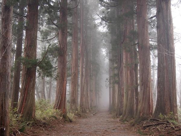 戸隠神社 奥社杉並木1