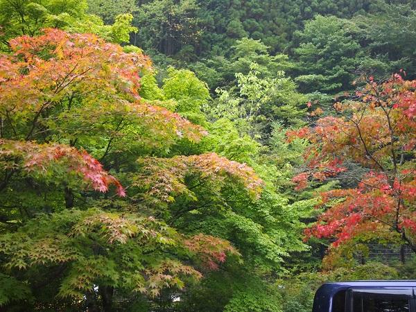 都民の森駐車場紅葉