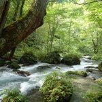 奥入瀬渓流(青森県十和田市)